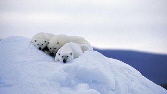 Les seigneurs de l'Arctique