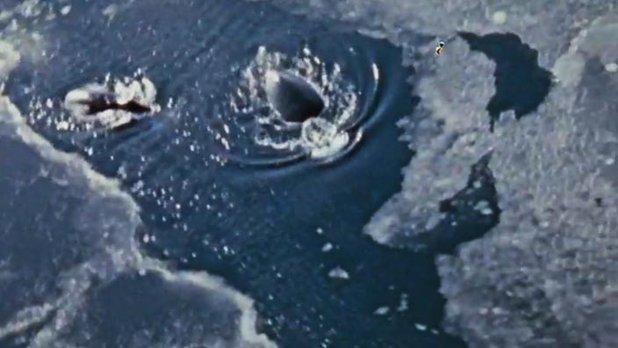 À la recherche de la Baleine Franche