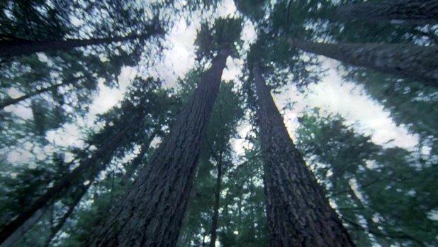 L'autre visage de la forêt