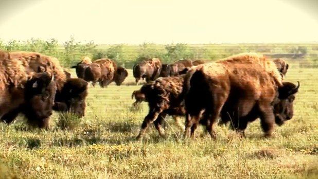 Bison Ranch - Reclamation Scientist