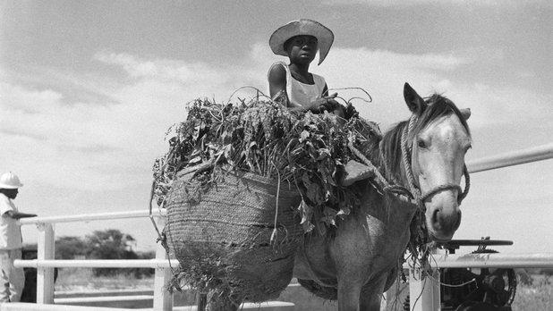 Amitiés haïtiennes (1re partie) - Bonjou'soleil