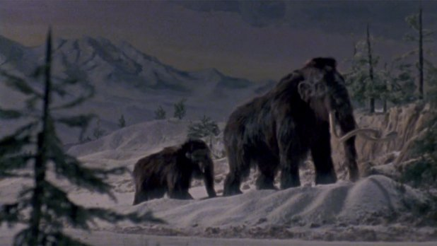 Canada vignettes : le mammouth