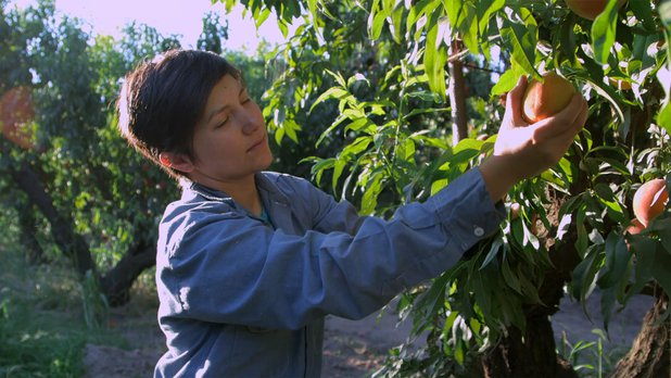 Changing Season: On the Masumoto Family Farm