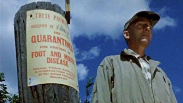 Épidémie de fièvre aphteuse