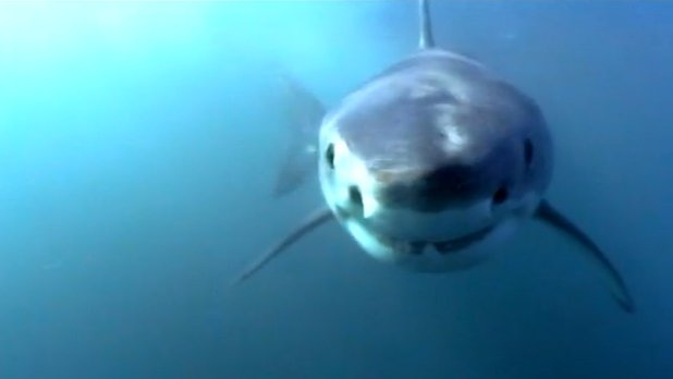 Be the Creature - Expedition Sharks