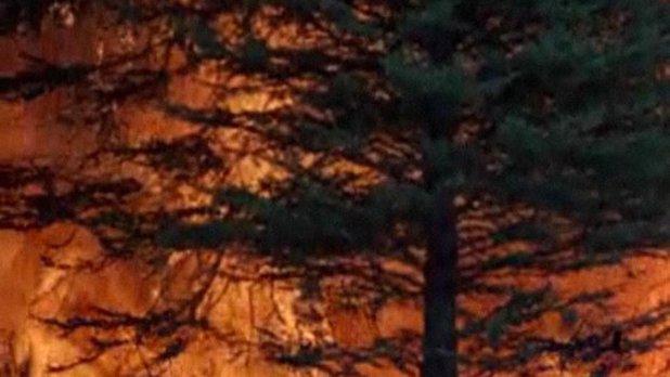 La Forêt sous les cendres