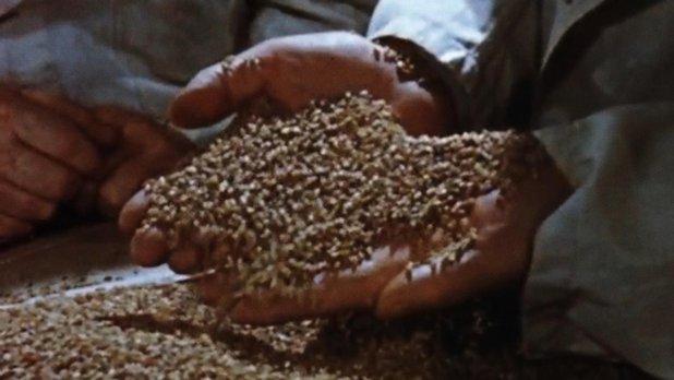 La manutention des grains au Canada
