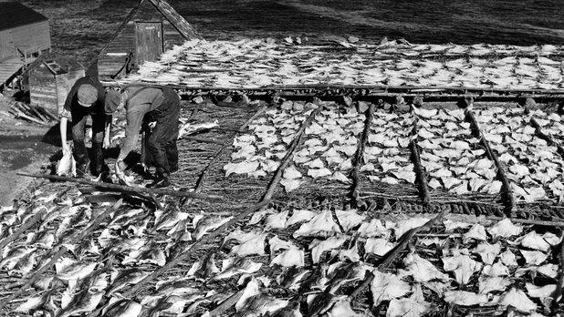 Pêcheurs de Terre-Neuve