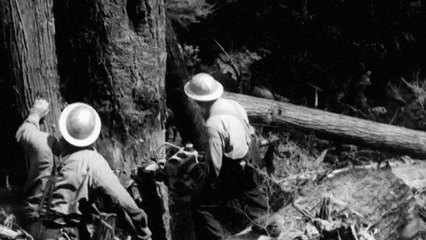 La coupe du bois en Colombie-Britannique