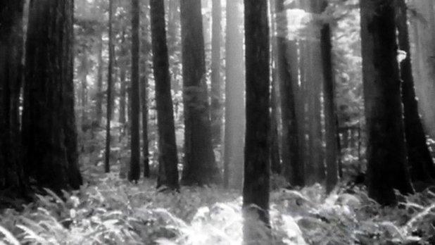 La forêt est un trésor