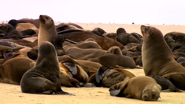 Green Paradise - Season 3 - Namibia, Fauna and Sands