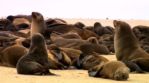 Nouveaux paradis - Saison 3 - Namibie : de faunes et sables