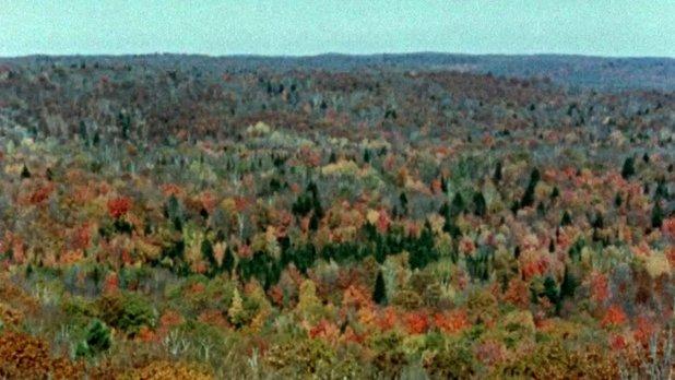 La forêt qui change