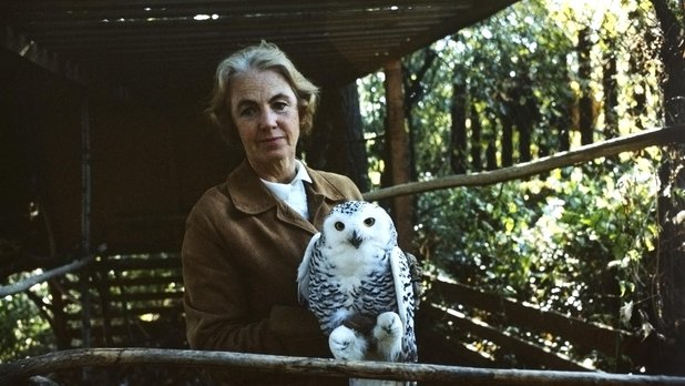 The Lady and the Owl
