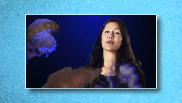 Today on Earth - Got Jellyfish? (Episode 3)