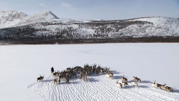 Becoming a Man - Tracking the White Reindeer