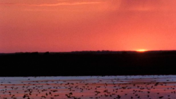 Waterfowl - A Resource in Danger