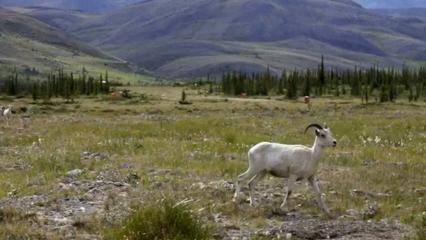Science at the Top of the World - Working in Arctic National Parks