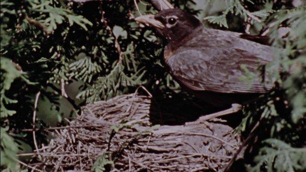 Hinterland Who's Who: Robin