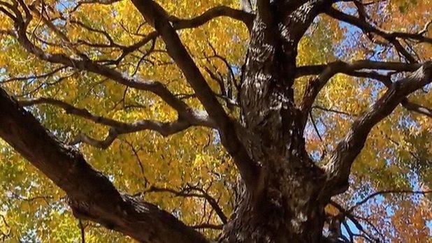 Sacrée montagne - Les arbres