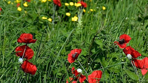 John McCrae's War: In Flanders Fields