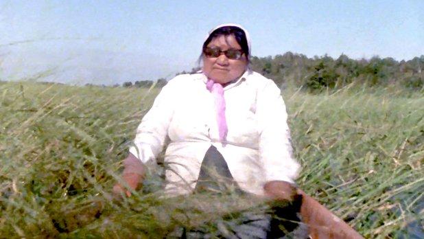 Canada Vignettes: Wild Rice Harvest Kenora