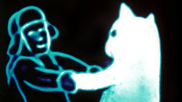 Le chat de neige