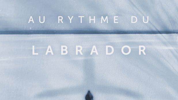 Au rythme du Labrador
