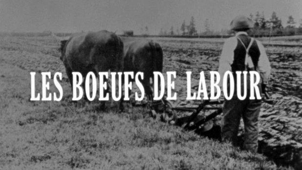Les boeufs de labour
