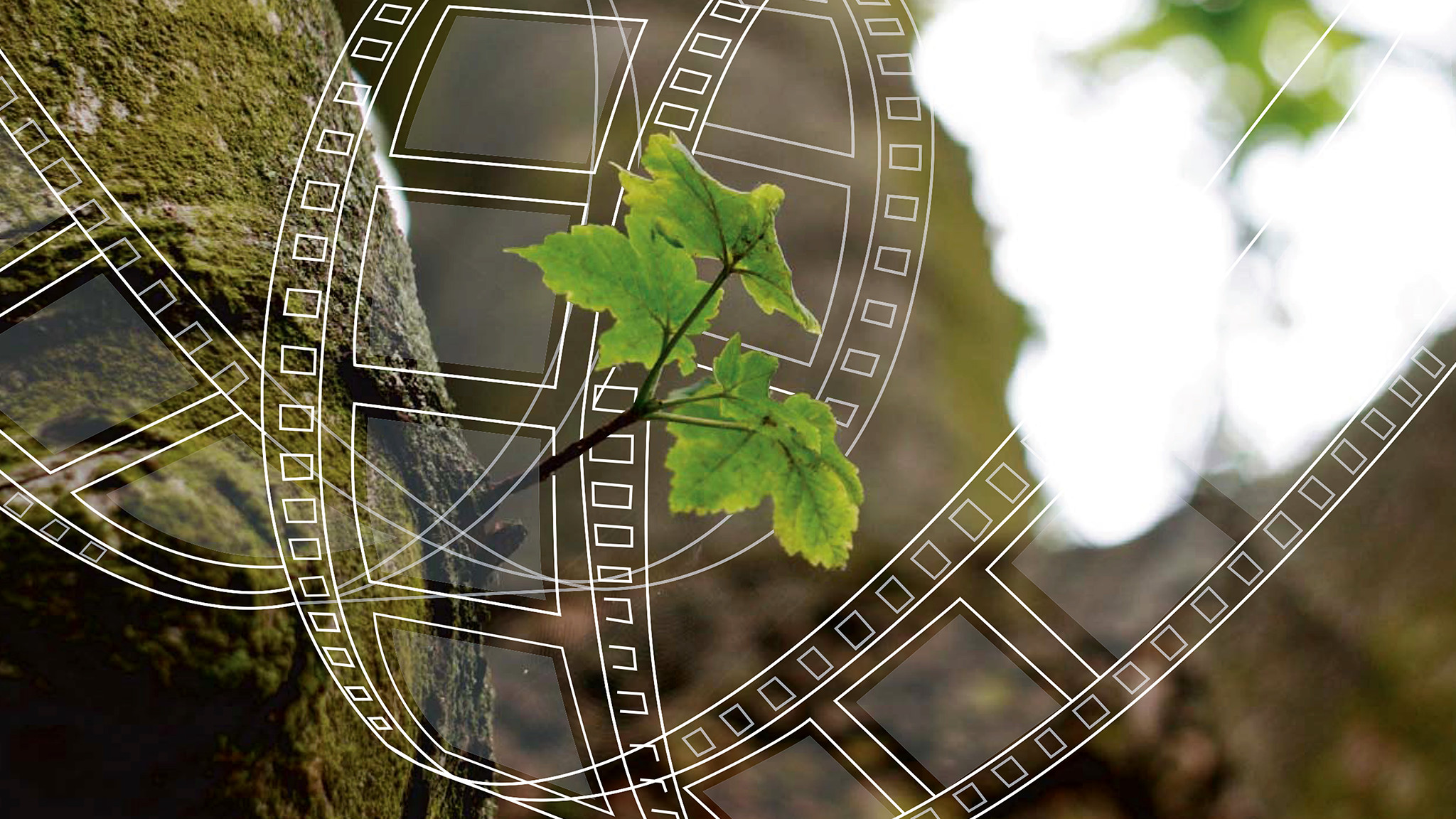 Des films pour changer le monde