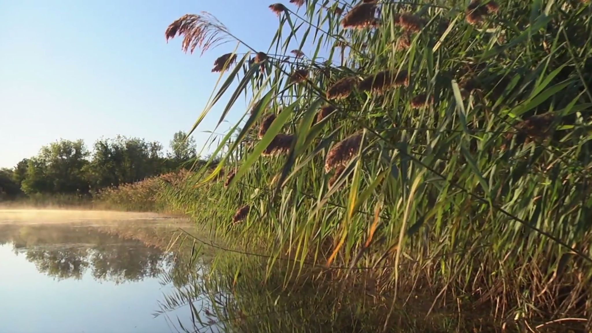 Tales of the Dundee Wetlands
