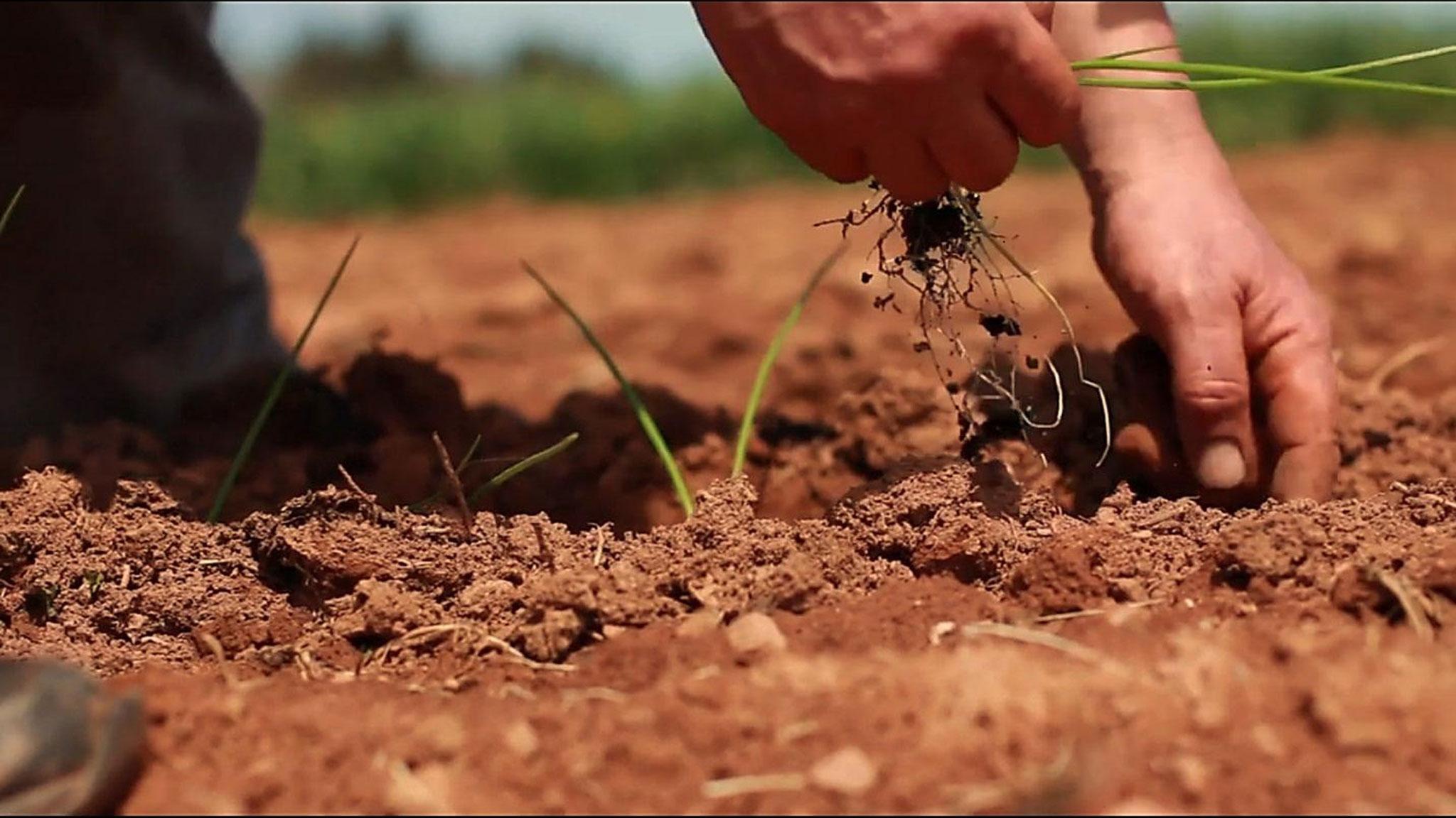 Jour de la Terre | Voyez 10 films sur l'environnement